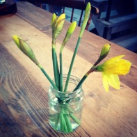 Conversation with a daffodil